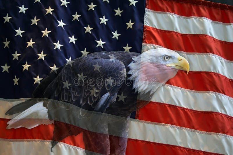 De Amerikaanse Vlag van de Adelaar stock afbeelding
