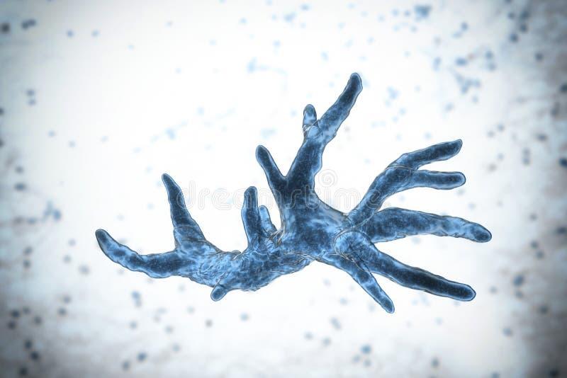 De amoebe van Balamuthiamandrillaris vector illustratie