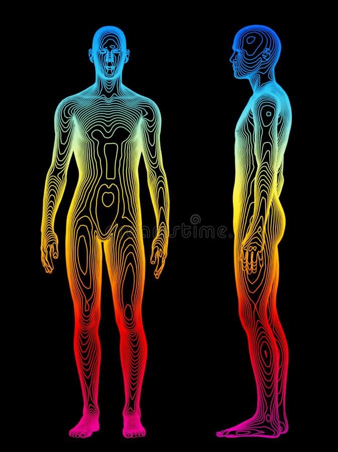 De Analyse van het lichaam royalty-vrije illustratie