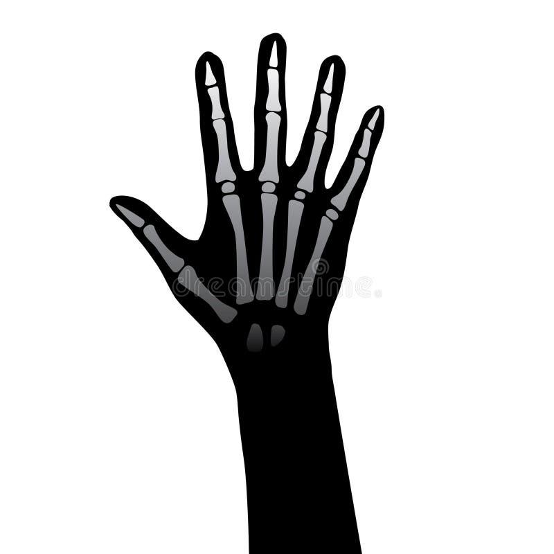 De anatomie van de hand vector illustratie. Illustratie bestaande ...
