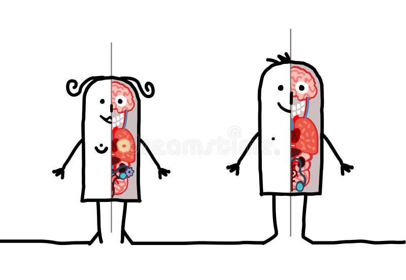 De anatomie van de man & van de vrouw royalty-vrije illustratie