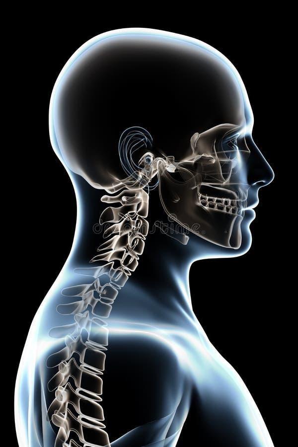 De Anatomie van de röntgenstraal op Zwarte vector illustratie