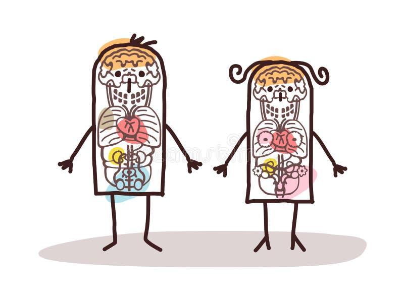 De anatomie van het beeldverhaalpaar vector illustratie