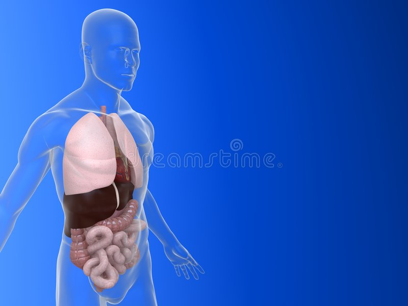De anatomie van het orgaan vector illustratie