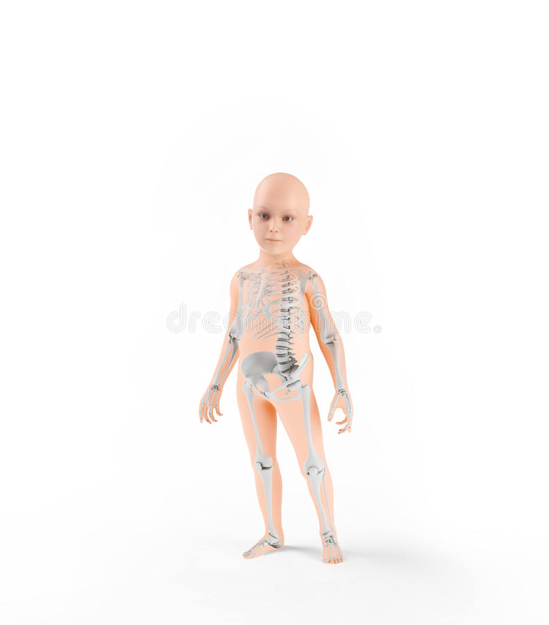 De anatomie van kinderen met skelet stock illustratie
