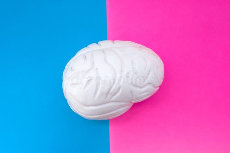 De anatomische die vorm van hersenen wordt gevestigd in midden van kader, door de helft door roze en blauwe achtergrond wordt ver stock afbeelding
