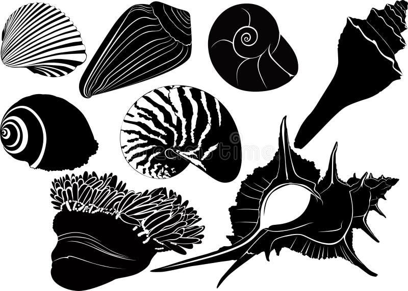 De anemonen van Nautiluszeeschelpen royalty-vrije illustratie