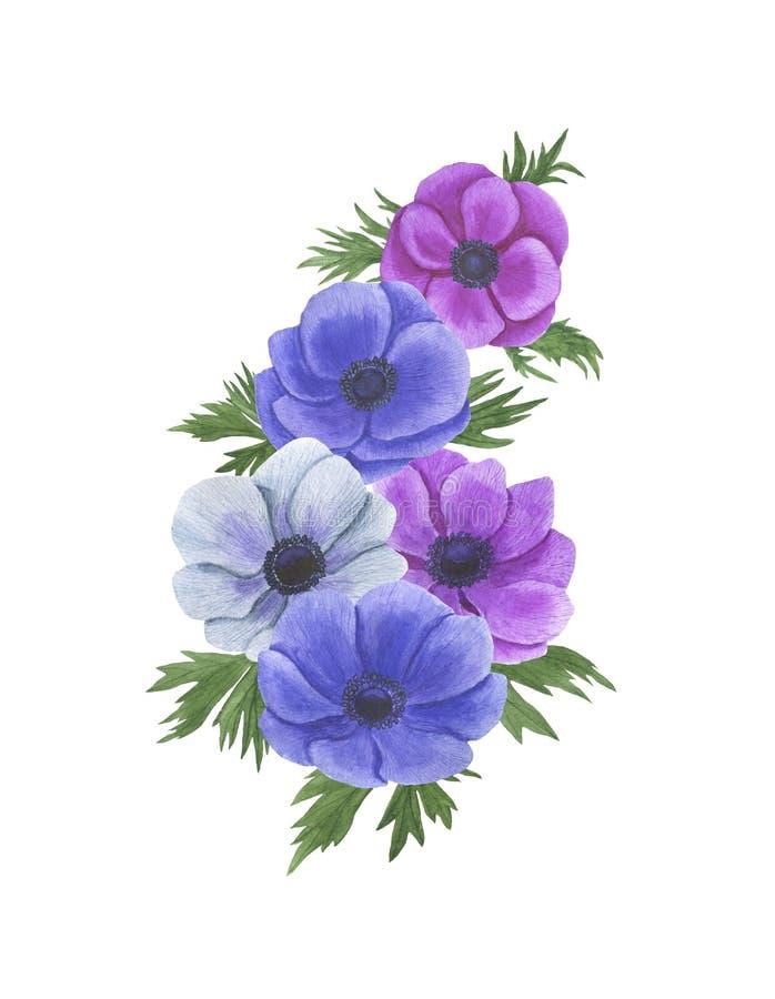 De anemoon bloeit de reeks van de waterverfillustratie van het het ontwerphuwelijk van de zomer botanische decoratie kaarten van  royalty-vrije illustratie