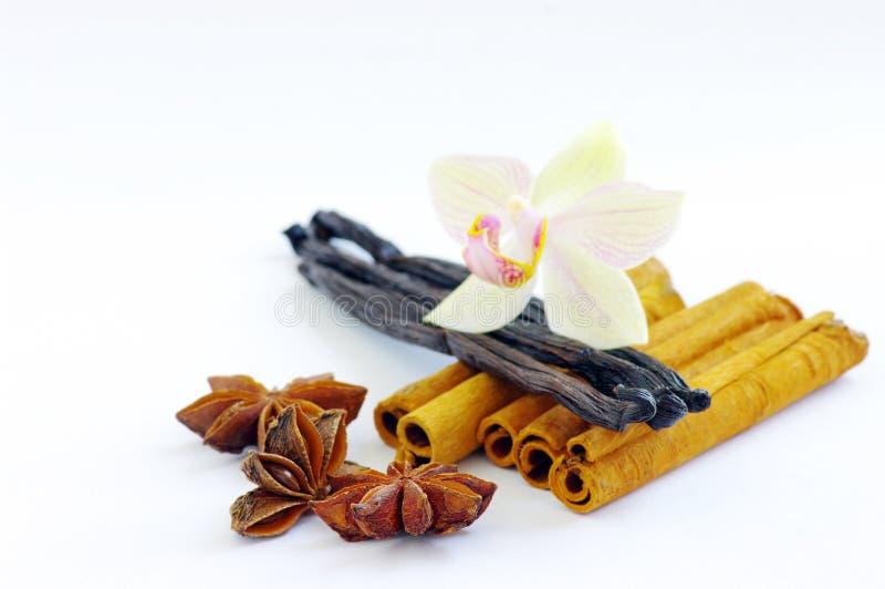 De anijsplant van de ster, kaneel, vanille stock afbeelding