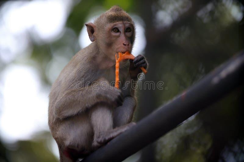 De apen zit en etend fruit stock afbeeldingen
