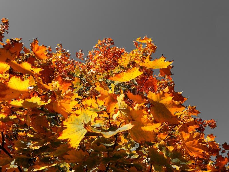 De apocalyptische herfst royalty-vrije stock afbeelding