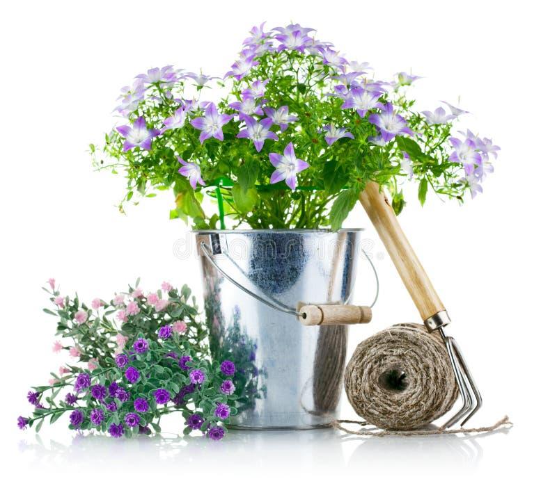 De apparatuur van de tuin met violette bloemen stock afbeelding