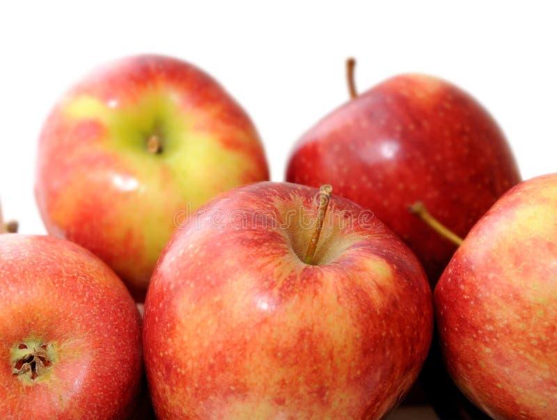 De appel van de premie jonagold stock afbeeldingen
