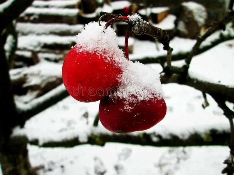 De Appel van de winter stock foto's