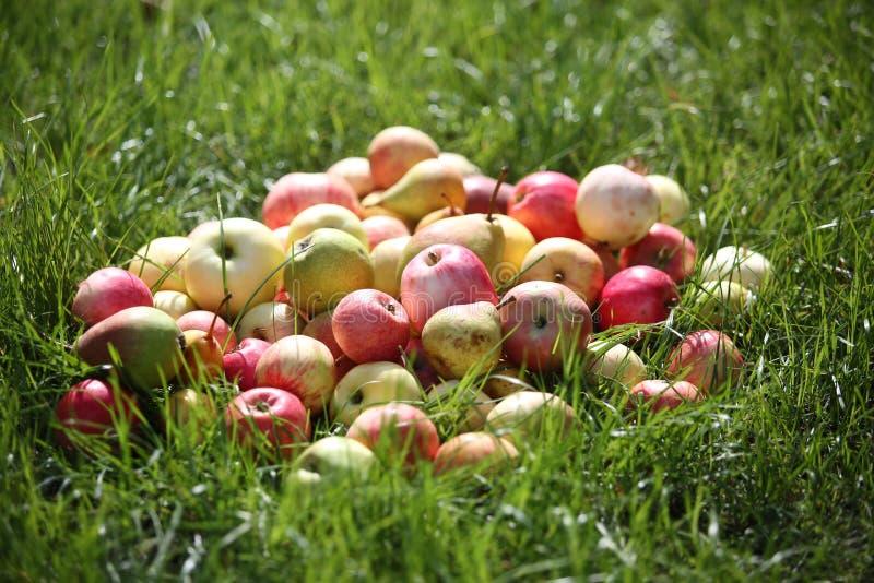 De appelen en de peren liggen op een groen tuingras royalty-vrije stock afbeeldingen