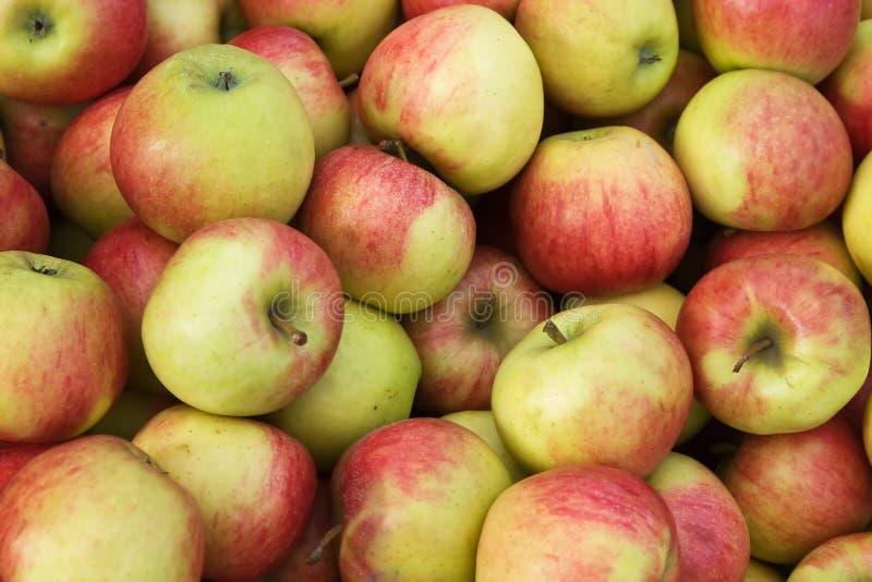 De appelen van Jonagold royalty-vrije stock afbeeldingen