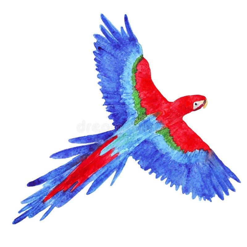 De ara tropische die vogel van de waterverfpapegaai op wit wordt geïsoleerd stock illustratie