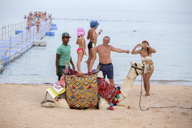De Arabische kerel samen met de kameel biedt hun diensten voor toeristen op het strand dichtbij rode overzees i Sharm el Sheikh,  royalty-vrije stock afbeeldingen