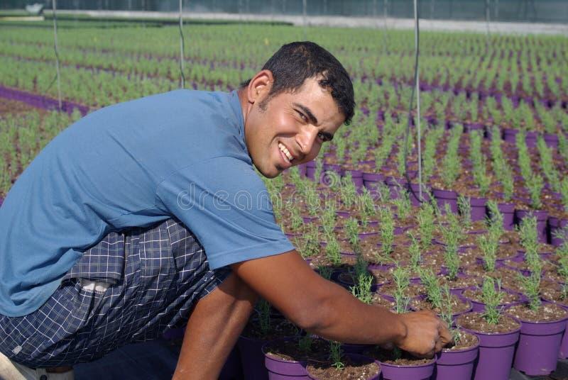 De arbeider die van het landbouwbedrijf nieuwe installaties voorbereidt stock foto's