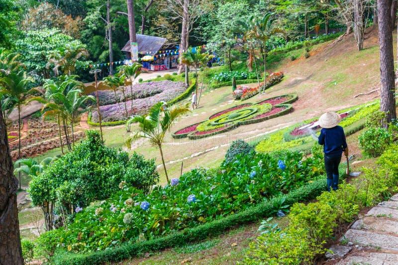 De arbeider in een tropisch park geeft bloemen in Dalat water stock fotografie