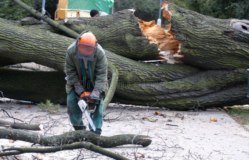 De arbeider maakt de gevallen boom schoon royalty-vrije stock foto
