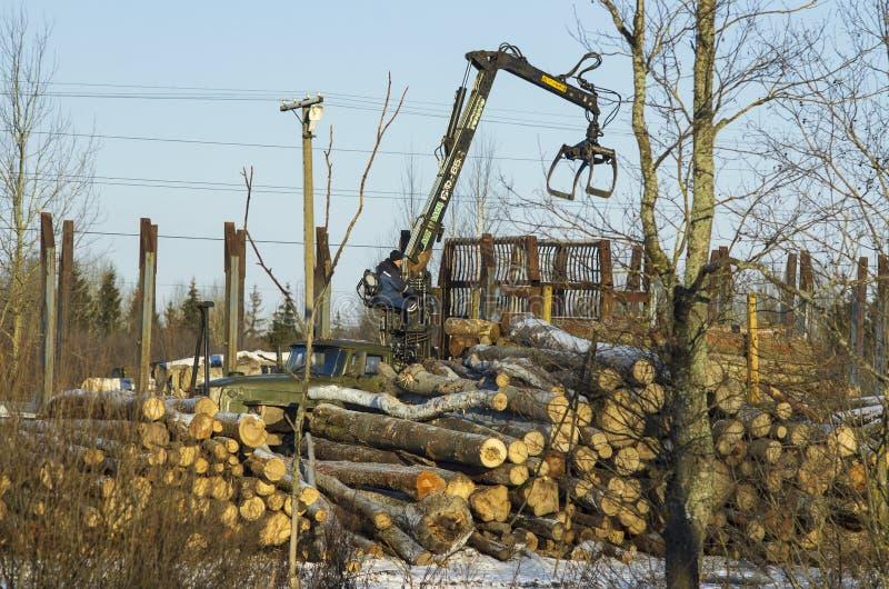 De arbeider op de lader van logboeken zet boomstammen van bomen stock foto's