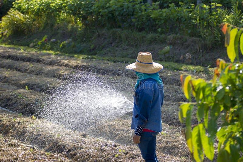 De arbeiders gaven in plantaardige percelen water stock foto's