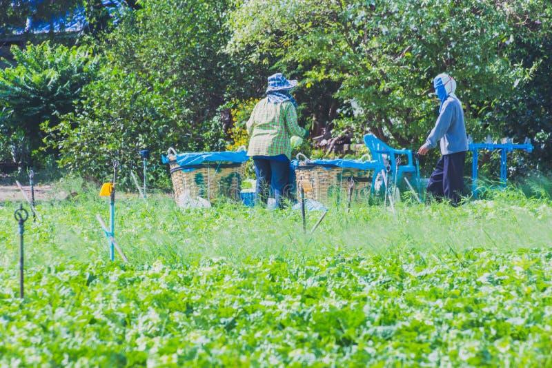 Download De Arbeiders Helpen Om Groenten Op Te Nemen Redactionele Afbeelding - Afbeelding bestaande uit gezond, landbouwer: 114226640