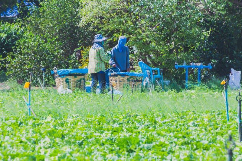 Download De Arbeiders Helpen Om Groenten Op Te Nemen Redactionele Foto - Afbeelding bestaande uit menselijk, levensstijl: 114227786