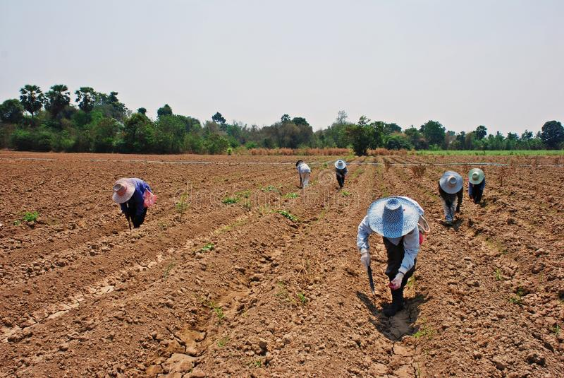 De arbeiders werken aan het landbouwbedrijf stock foto's
