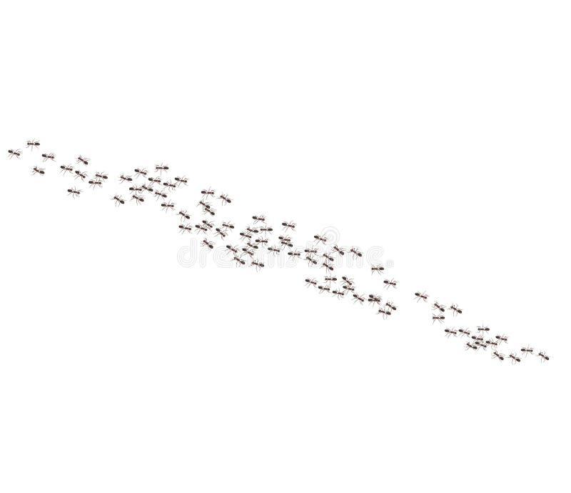 De Argentijnse mieren kruipen in een lijn stock illustratie