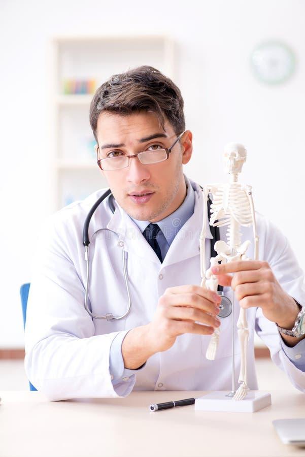 De arts die menselijk lichaam op skelet verklaren stock afbeelding