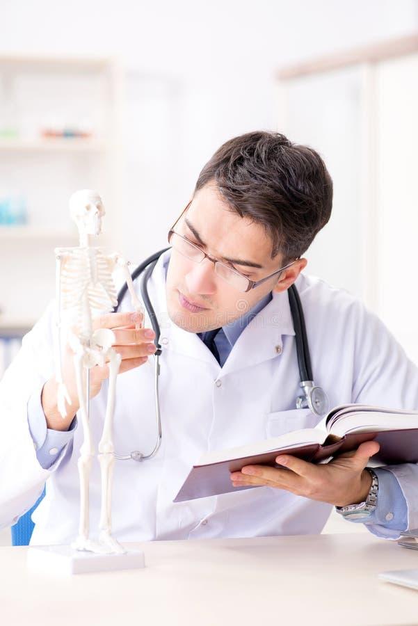De arts die menselijk lichaam op skelet verklaren stock fotografie