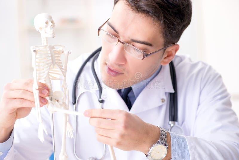 De arts die menselijk lichaam op skelet verklaren royalty-vrije stock foto's