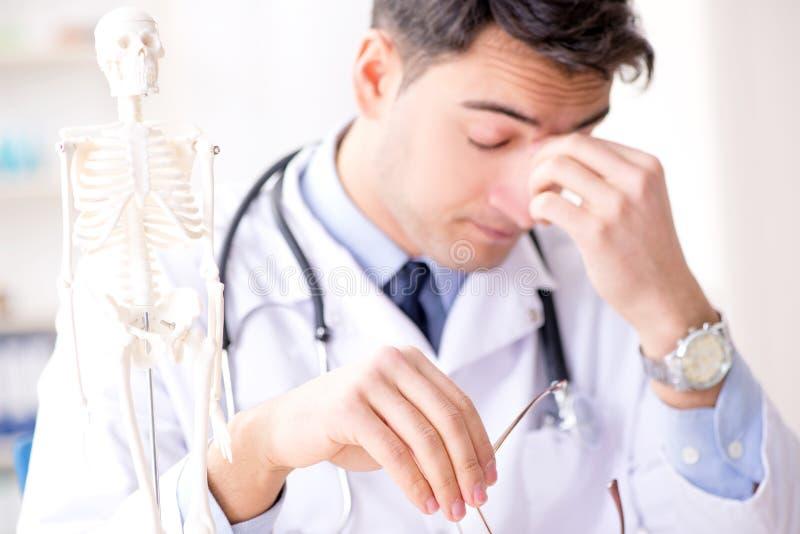 De arts die menselijk lichaam op skelet verklaren royalty-vrije stock afbeeldingen