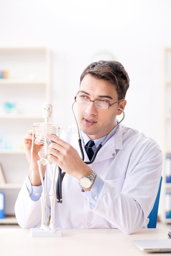 De arts die menselijk lichaam op skelet verklaren stock foto