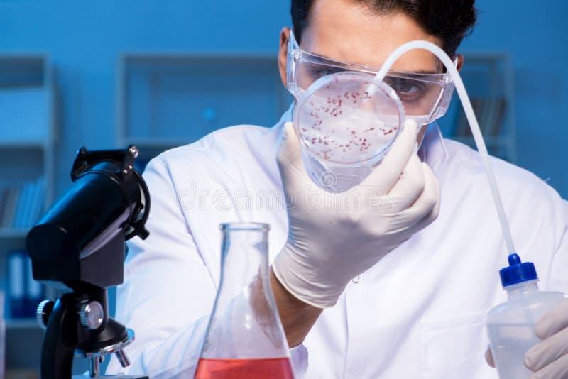 De arts die nieuw virus in laboratorium onderzoeken bij nacht stock foto