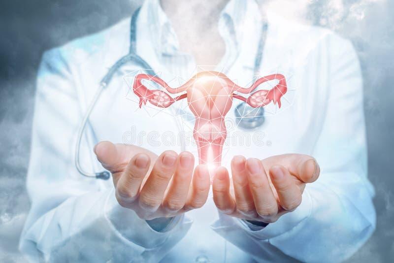 De arts toont de baarmoeder royalty-vrije stock foto