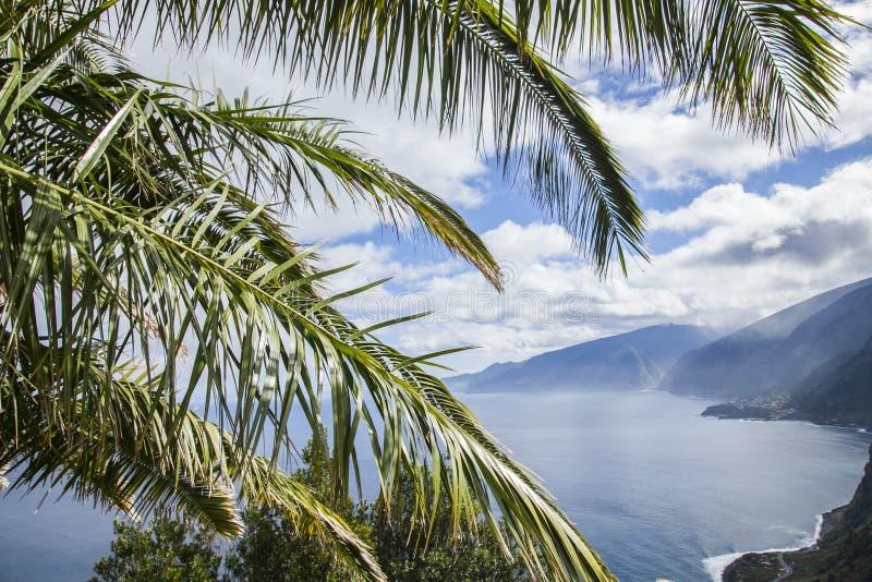 De Atlantische Oceaan met een palm, het noorden van Madera royalty-vrije stock fotografie