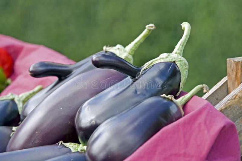 De aubergine van de Markt van landbouwers stock afbeeldingen