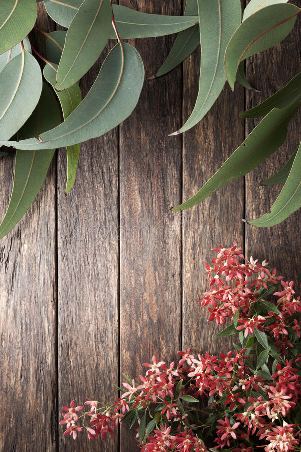 De Australische Achtergrond van de Bloemenzomer stock foto