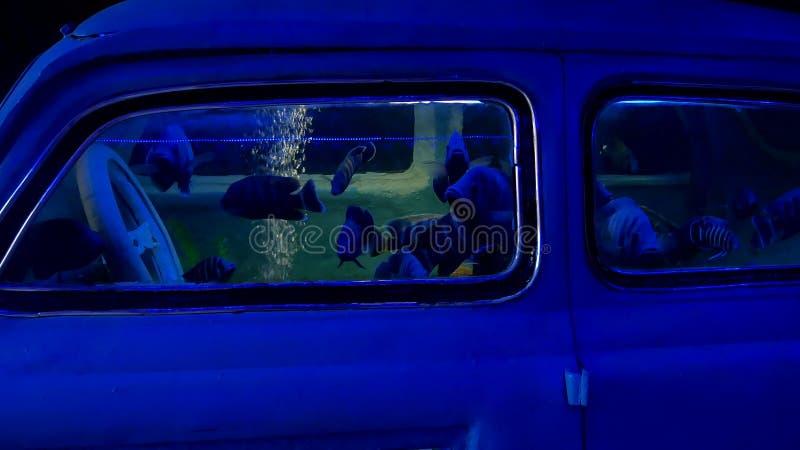 De autoauto verdronk onderwater De vissen van de ongevallenneerstorting zwemmen overzeese oceaan stock fotografie