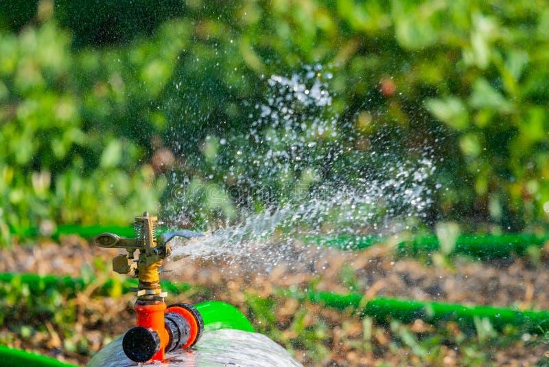 De automatische sproeier van het Tuingazon in actie het water geven gras Groen Aardconcept Als achtergrond royalty-vrije stock foto's