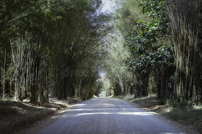 De autosnelweg van de bamboetunnel royalty-vrije stock foto's
