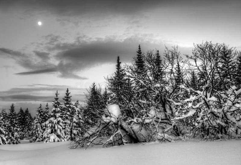 De avondlandschap van de winter met maan royalty-vrije stock foto