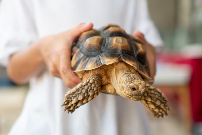 De Aziatische holding van het kindmeisje en het spelen met schildpad met nieuwsgierig en pret stock afbeelding