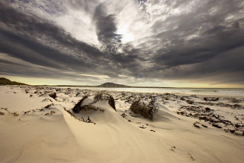 De Baai van de olifant - het Eiland van de Kiezelsteen - Falkland Eilanden royalty-vrije stock afbeeldingen
