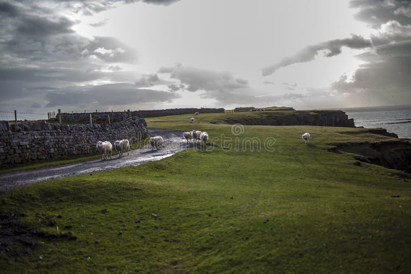 De Baai van Swansea stock foto's