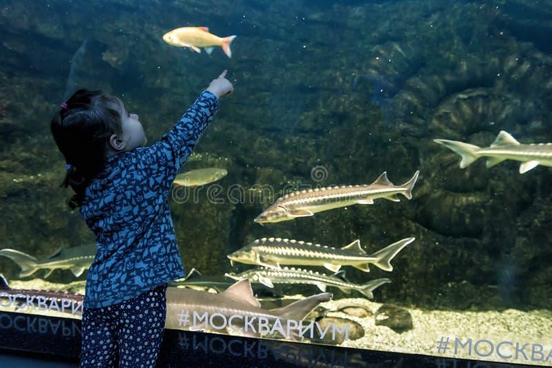 De baby bekijkt de overzeese vissen in aquarium stock foto's
