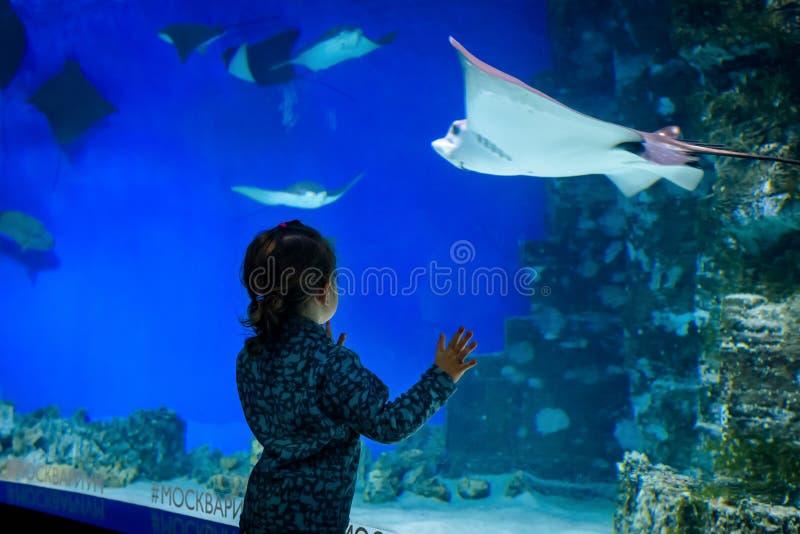 De baby bekijkt de pijlstaartroggen in mooi blauw aquarium stock afbeelding